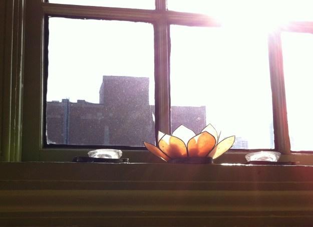 lotus on window