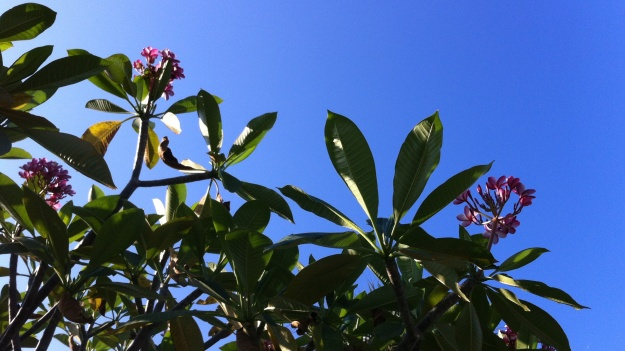 I can't get over how BLUE the sky is in Florida... and the pink flowers provide a beautiful contrast.