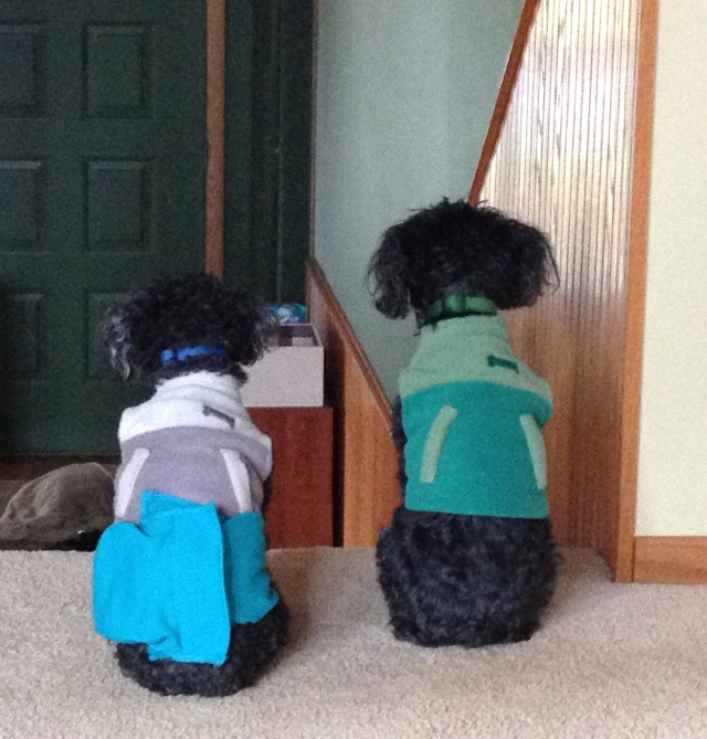The analytical puppy (Charley) is the one on the right [in green].  His brother (Jojo) is the one wearing the blue diaper.  They both crack me up.