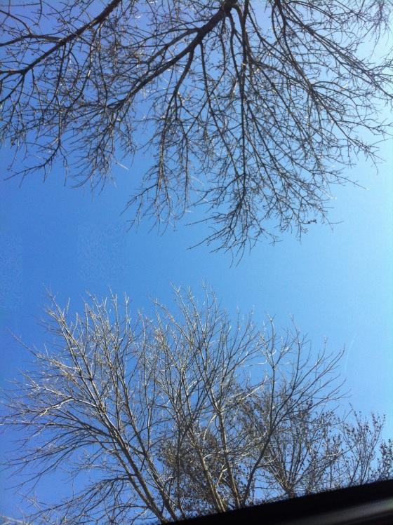 trees reaching