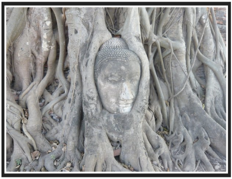 buddha head in tree trunk