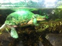 35_turtle